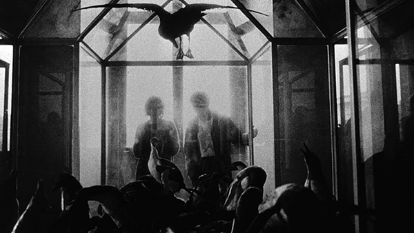 The birds of La Jetée's Jardins des Plantes scene. Image courtesy of the Criterion Collection.