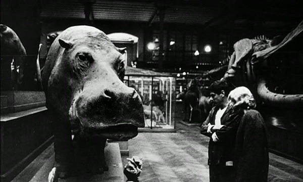 La Jetée's nameless man and woman examine a hippopotamus. Image courtesy of Gravity Kat.