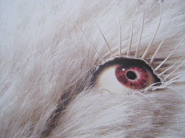 The eye and lashes of an albino boar trophy at Le Musée de la Chasse et de la Nature. Image by the author.